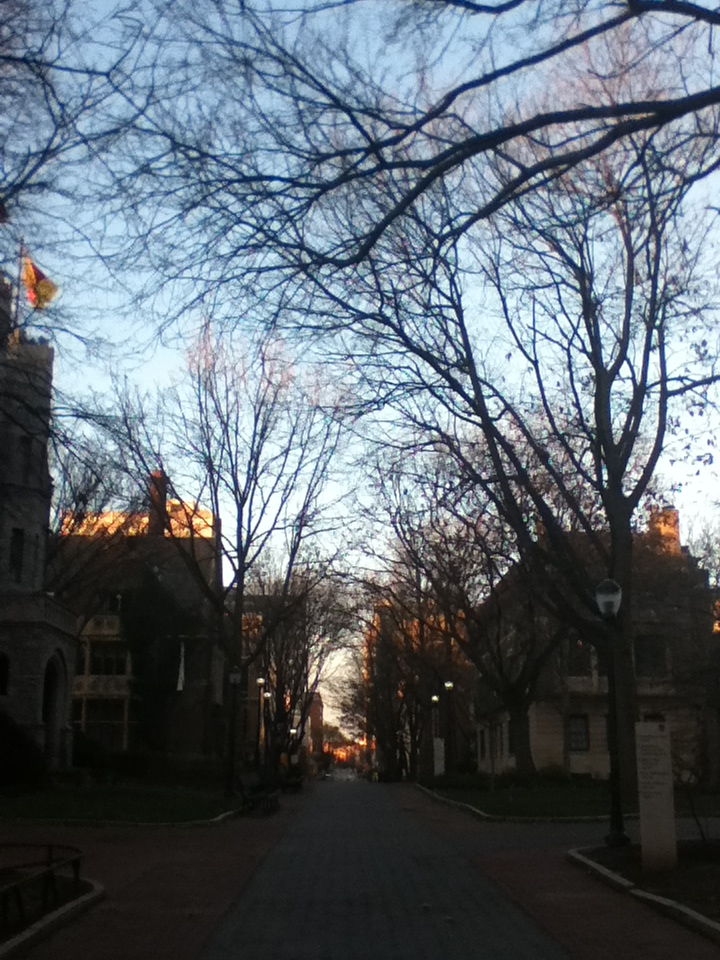 study mornings, Locust Walk